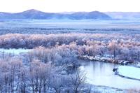 北海道 霧氷の釧路湿原