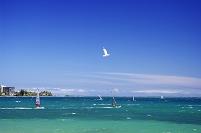 ウインドサーフィンと青い海の南太平洋