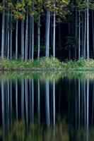 奈良県 宇陀市 龍王ヶ渕に映る木々