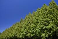 神奈川県 県立相模原公園