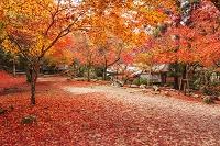 広島県 宮島 紅葉谷公園