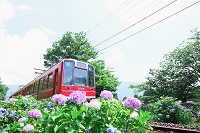 神奈川県 箱根 あじさい電車