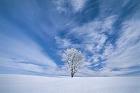 北海道 雲のある空と一本の木