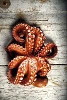 イタリア ガルガーノ 蛸