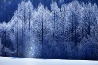 北海道 樹氷のカラマツ林とサンピラー 美瑛町