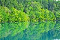 秋田県 秋扇湖