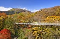 栃木県 那須高原の弁天吊橋