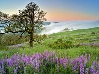 アメリカ合衆国 カリフォルニア州