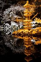 石川県 兼六園 雪と海石塔