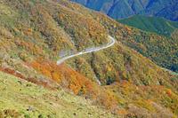 滋賀県 伊吹山ドライブウェー