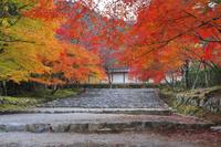 京都府 二尊院 紅葉馬場の紅葉