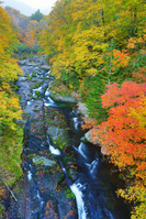北海道 賀老高原 千走川とブナ林などの紅葉