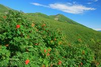 長野県 八合目から御嶽山 ナナカマドとハイマツ(16年9月)