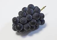葡萄 ナガノパープル