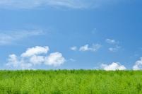 北海道 雲湧く空と若木の丘