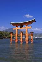 広島県 厳島神社 大鳥居