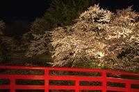 青森県 弘前公園の桜のライトアップ