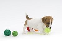 毛糸と仔犬