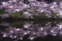 新潟県 上越市 春の高田城址公園
