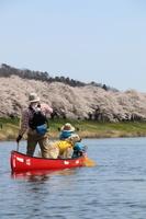 白石川堤一目千本桜をカヌーから花見