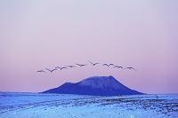 北海道 タンチョウが飛ぶ丘