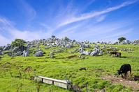 愛媛県 石灰岩が点在する四国カルスト県立自然公園