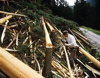 林業 伐倒後の皮むき