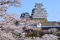 満開の桜 三の丸広場から姫路城天守閣