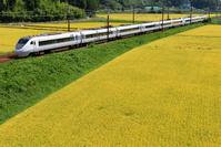 滋賀県 北陸本線 色づいた田園地帯を走る681系特急しらさぎ