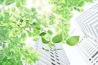 高層ビルと舞い散る葉っぱ