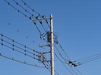 住宅街の送電線