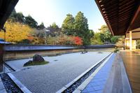 京都府 龍安寺 方丈石庭と紅葉