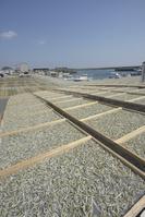 兵庫県 淡路島 いかなごの天日干し