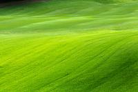 ゴルフ場の芝