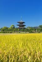 奈良県 法起寺と田園