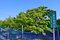 練馬区 柿果樹園 生産緑地地区