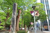 東京都 府中けやき並木