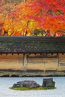 京都 龍安寺の紅葉