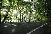 青森県 木漏れ日さす新緑の道