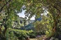 イギリス コーンウォール トレバ・ガーデン