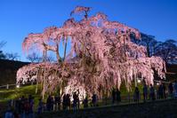 福島県 三春滝桜 夜景