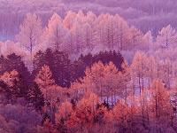 北海道 樹氷