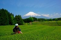 静岡県 富士山と茶摘み娘