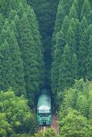 大分県 ゆふいんの森号