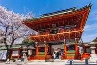 東京都 桜咲く神田明神の随神門