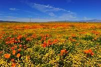アメリカ合衆国 カリフォルニア 花園 アンテロープバレー カ...