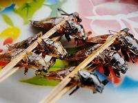 ラオス北部 タガメ料理