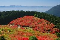奈良県 葛城山 つつじ園