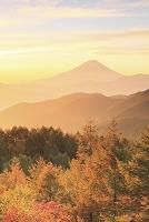 山梨県 富士川町 丸山林道 日の出の富士山と黄葉の山並み