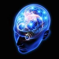 CG 人体 脳